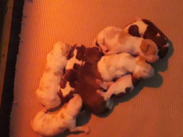 a_pups_one_week_01