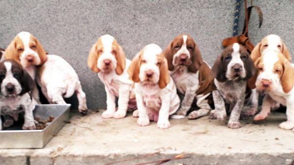 puppies_03