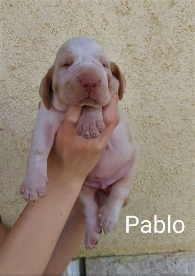pablo_0003
